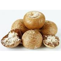 Buy cheap Betel Nuts product