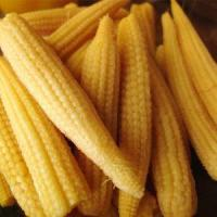 Buy cheap All About Cans of Big Yellow Corn Kernels for Sale product