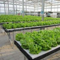 Buy cheap Greenhouse DFT Hydroponic Cultivation System for Planting product