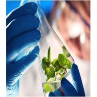 what is the application of genetic engineering in agriculture