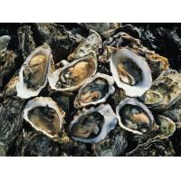 Buy cheap Oyster powder could fight cancer product