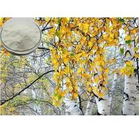Buy cheap White Birch Extract Birch bark extract product