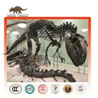 Buy cheap Life Size Dinosaur Fossils for Sale for Science Museum Exhibitions product