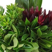 Buy cheap Tropical Wedding Greenery Combo Box from Wholesalers