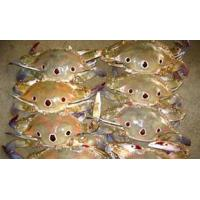 Buy cheap Pomfret Frozen Three Spotted Crab with high quality product
