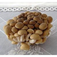 Buy cheap Fresh Mushroom TC0104 product