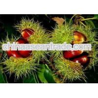 Buy cheap Agriculture 2013 Crop Chinese Fresh Chestnut, Lower Price sweet chestnuts product