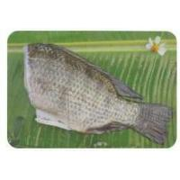 Headless Tilapia Fish