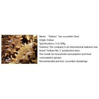 Buy cheap Seafood Finished Sea cucumber (live) product