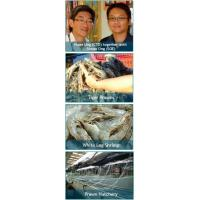 Buy cheap Prawn Culture product