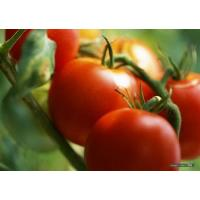 Buy cheap Plant(Herbal) Extracts Lycopene(,-carotene) CAS:502-65-8 product