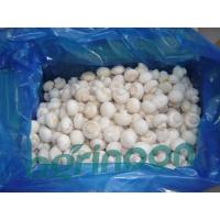 Buy cheap Frozen Champignon Mushroom product