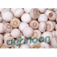 Buy cheap Fresh Champignon mushroom product