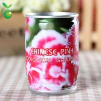 Flowers&Grass Chinese Pink/Can Flower/Mini Garden Canned Plants/Fast Delivery