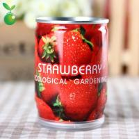 Seasons Strawberry/Can Plants/Mini Garden Canned Plants/Festival Gifts