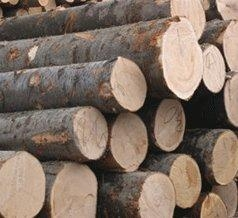 Quality Radiata Pine Logs for sale
