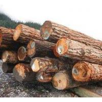 Buy cheap Hemlock Spruce Hemlock Spruce Logs product