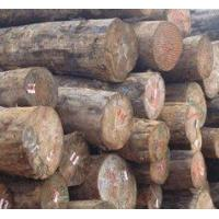 Buy cheap Douglas Fir Douglas Fir Logs product