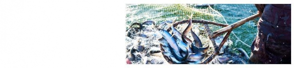 Commercial fishing nets 42643507 for Commercial fishing nets for sale