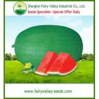 Buy cheap High Yield Super Green Oval Shape Red Watermelon Seeds--6500kg/667m2 product