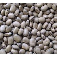 mucuna pruriens extract, mucuna pruriens extract images