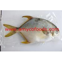 Buy cheap Golden Pompano product