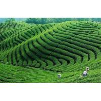 Buy cheap The supply of natural resources in the west of Hubei Province Green Tea Se tea health tea product