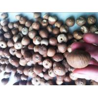 Buy cheap Nuts & Seeds Dried Betel Nuts Whole & product