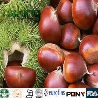 Buy cheap Glycosides  Horse Chestnut Extract product