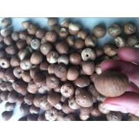 Buy cheap Dried Betel Nuts Whole & Split product