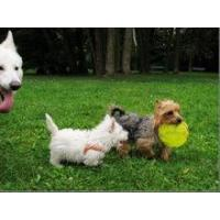 Hot Selling Cheap Flying PE Plastic Frisbee