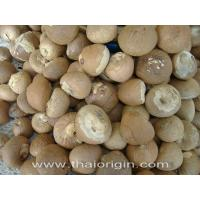 China Dried betel nut on sale