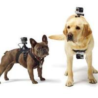 Buy cheap GoPro Fetch (Dog Harness) GoPro Fetch (Dog Harness) product
