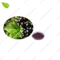 Buy cheap Blackcurrant Juice Powde product