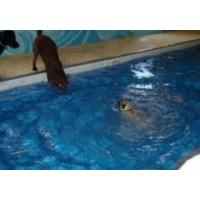 Buy cheap War Dog and Service Dog Training Pools product