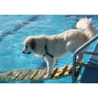 Buy cheap dog day care pools product