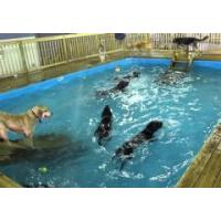 Buy cheap dog pools product