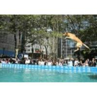 Buy cheap Dog Diving Pools product