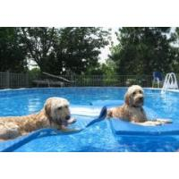 Buy cheap family dog pool product