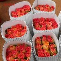 Buy cheap Fresh Rose Flowers from wholesalers