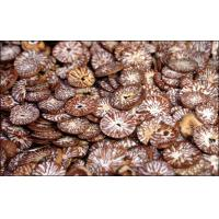 Buy cheap Sliced Betel Nuts product